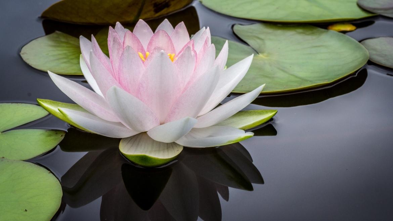 Aktuell kein Meditationskurs im Dhammazentrum