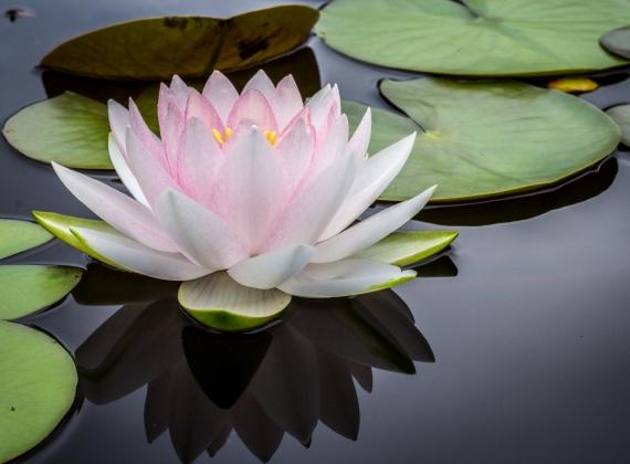 Aktuell kein Meditationskurs